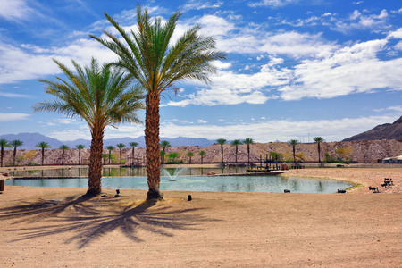 timna: Resting area in Timna park Negev desert Israel. Small pool with fountain and palm trees on bright sunny day