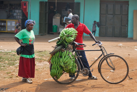 kampala: KAMPALA UGANDA AUG 26 2010: Native people carry bananas by bike in slum of Kampala. Nearly 40 of slum dwellers have a monthly income of just 2500 shillings less than a dollar