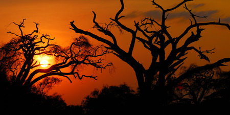 colore: Silhouette of a dead tree over dramatic red sunset in the african savanna, Kenya, Amboseli national park. Ecological concept