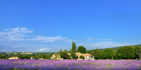 Stunning landscape with lavender field and old farmhouse under warm evening light. Plateau of Sault, Provence, France