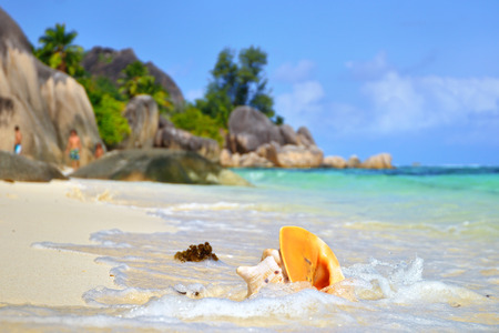d'argent: Big orange shell on the sandy beach against rocky background. Seychelles, La Digue, Source DArgent Stock Photo