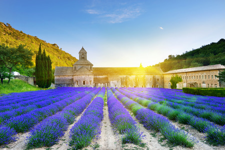 monastery: Most beautiful lavender field in Provence. An ancient monastery Abbaye Notre-Dame de Senanque Abbey of Senanque at sunset. Vaucluse, France Stock Photo