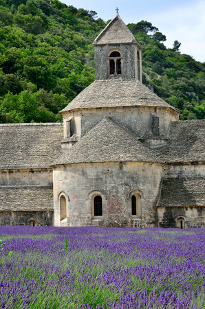 senanque: Most beautiful lavender field in Provence. An ancient monastery Abbaye Notre-Dame de Senanque Abbey of Senanque at early morning. Vaucluse, France