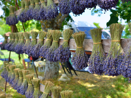Bunches of lavender flowers on a wooden fence outdoor. Provence, France
