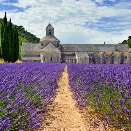 vaucluse: Most beautiful lavender field in Provence. An ancient monastery Abbaye Notre-Dame de Snanque Abbey of Senanque at early morning. Vaucluse, France