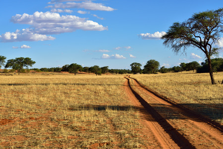 kalahari: Dirt road in the Kalahari desert at sunset time, Namibia