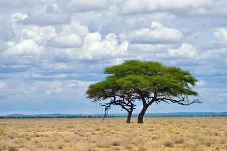 Klassische afrikanische Landschaft. Etosha Nationalpark bei Sonnenaufgang Zeit. Big einsamen Akazie Regenschirm und Hügel im Hintergrund
