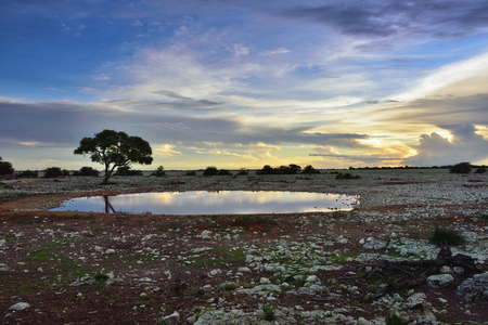 waterhole: African night. Acacia tree silhouette on the waterhole shore against a bright sunset sky. Namibia