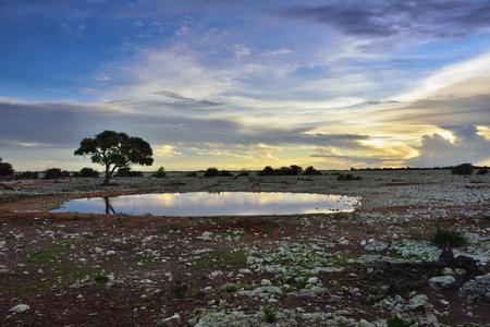 at waterhole: noche africana. silueta del árbol de acacia en la orilla del pozo de agua contra un cielo brillante puesta de sol. Namibia