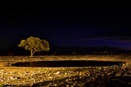 waterhole: African night. Acacia tree on the waterhole shore against a night sky. Namibia