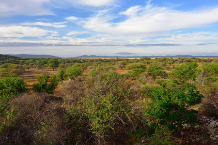 safari game drive: Morning view on the beautiful Damaraland landscape, Namibia, Africa Stock Photo