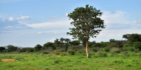 Schöne afrikanische Landschaft in der Dämmerung, Waterberg Plateau