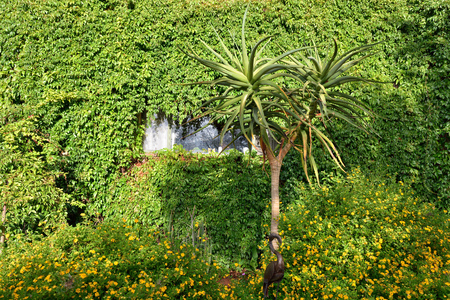 unspoilt: Wall of an accommodation unit in in Toko Lodge covered with green plant. Toko is the gateway to Western Etosha, Damaraland and the unspoilt Kaokoveld Stock Photo