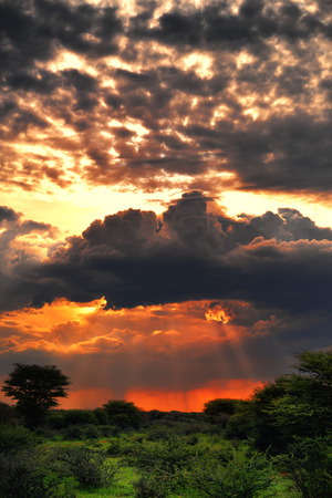 safari game drive: Dramatic stormy sunset under jungle in central Namibia Waterberg region. Namibia, Africa