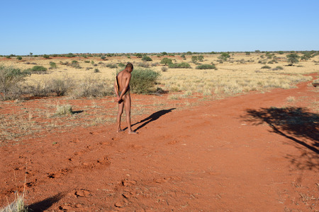 KALAHARI, NAMIBIA - JAN 24, 2016: Bushmen hunter checks an animals traces on the ground. San people, also known as Bushmen are members of various indigenous hunter-gatherer peoples of Southern Africa