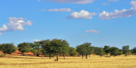 Beautiful landscape in the Kalahari desert at sunset time, Namibia, Africa