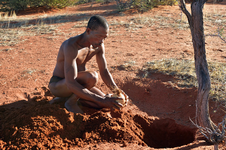 KALAHARI, NAMIBIA - JAN 24, 2016: Bushmen hunter buries ostrich egg with water for next time. San people, also known as Bushmen are members of various indigenous hunter-gatherer peoples of Southern Africa