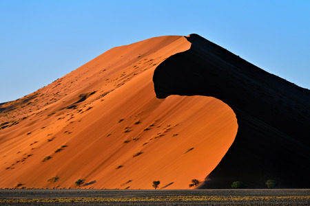 namib: Beautiful landscape with dune 40 and trees at sunrise, Sossusvlei, Namib Naukluft National Park, Namibia Stock Photo