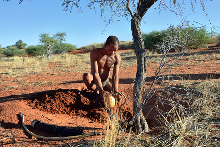 KALAHARI, NAMIBIA - JAN 24, 2016: Bushmen hunter buries ostrich egg with water. San people, also known as Bushmen are members of various indigenous hunter-gatherer peoples of Southern Africa Editorial