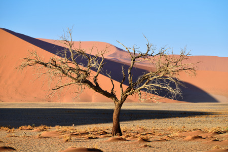 sossusvlei: Beautiful landscape with red dunes and dead tree at sunrise, Sossusvlei, Namib Naukluft National Park, Namibia Stock Photo