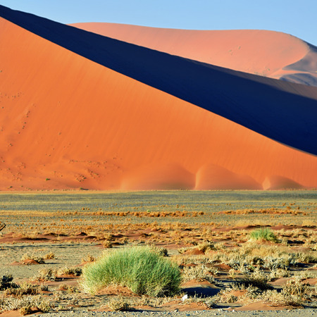namib: Beautiful landscape with big red dunes, Sossusvlei, Namib Naukluft National Park, Namib desert, Namibia.Focus on the foreground