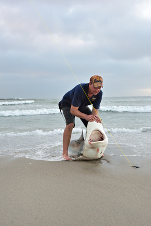 sportfishing: CAPE CROSS, NAMIBIA - JAN 31, 2016: Unidentified fisherman caught the big copper shark on the beach at twilight. A tag and release fishing is popular in Namibia Editorial