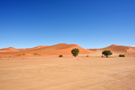 namib: Beautiful landscape with dunes and trees at sunrise, Sossusvlei, Namib Naukluft National Park, Namibia
