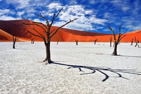 acacia: Dead Camelthorn Trees against red dunes and blue sky in Deadvlei, Sossusvlei. Namib-Naukluft National Park, Namibia, Africa Stock Photo