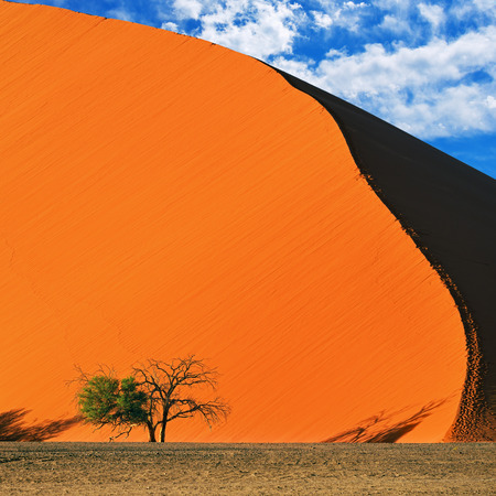 namib: Beautiful landscape with red dune and trees at sunrise, Sossusvlei, Namib Naukluft National Park, Namibia