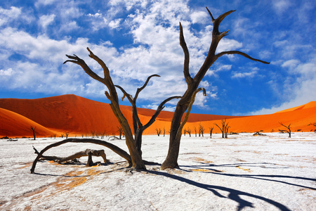 Dead Camelthorn Trees against red dunes and blue sky in Deadvlei, Sossusvlei. Namib-Naukluft National Park, Namibia, Africa 스톡 콘텐츠