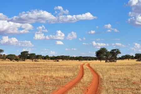 Dirt road in the Kalahari desert at sunset time, Namibia