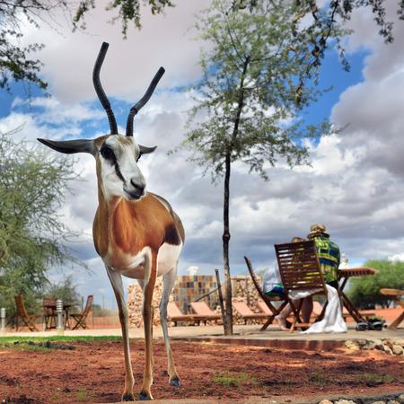 KALAHARI, NAMIBIA - JAN 23, 2016: Antelope sprigbok with horns protected on site of Bagatelle Kalahari Game Ranch Imagens
