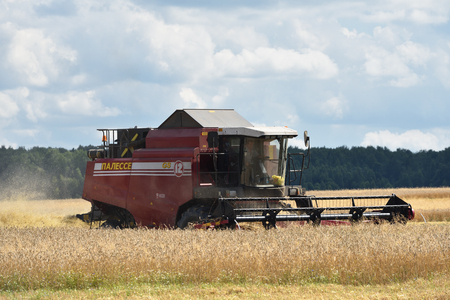 continuously: NARO-FOMINSK, RUSSIA - JUL 31, 2016: Harvesting of wheat. Combine Harvester in agricultural fields. Russia ranks first in the export of wheat in the world is continuously increasing grain production