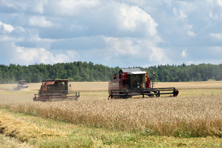 NARO-FOMINSK, RUSSIA - JUL 31, 2016: Harvesting of wheat. Combine Harvester in agricultural fields. Russia ranks first in the export of wheat in the world is continuously increasing grain production Imagens - 60518566