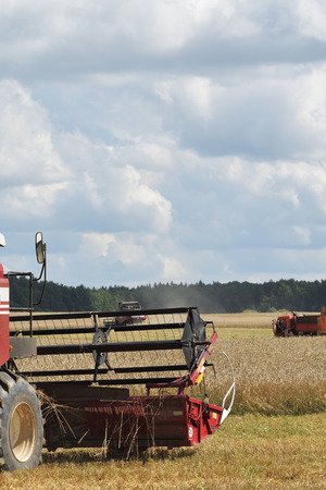 in the ranks: Harvesting of wheat. Combine Harvester in agricultural fields. Russia ranks first in the export of wheat in the world