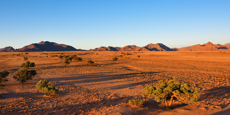 namib: Beautiful namibian landscape at sunset, Sossusvlei, Namib Naukluft National Park, Namibia