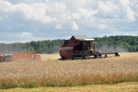the arable land: NARO-FOMINSK, RUSSIA - JUL 31, 2016: Harvesting of wheat. Combine Harvester in agricultural fields. Russia ranks first in the export of wheat in the world is continuously increasing grain production