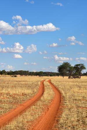 safari game drive: Dirt road in the Kalahari desert at sunset time, Namibia