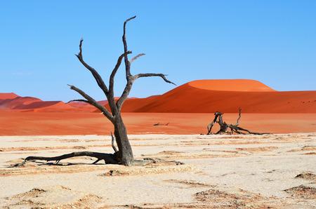 赤い砂丘と Deadvlei、ソーサス フライの青い空 Camelthorn 枯れ木ナミブナウクルフト国立公園、ナミビア、アフリカ