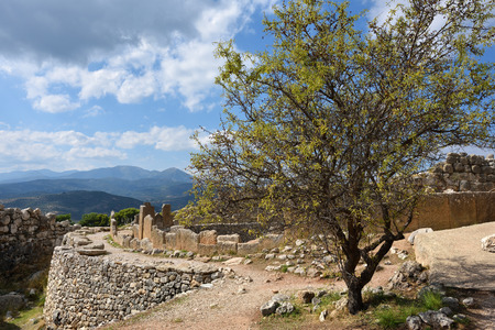 archaeological sites: Olive tree on a ruins of the archaeological sites of Mycenae and Tiryns