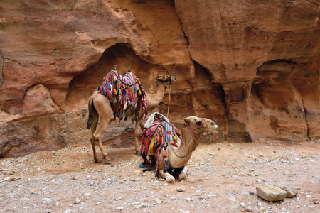 nabatean: Camels Siq canyon in Petra, lost city in Jordan. Famous UNESCO heritage site