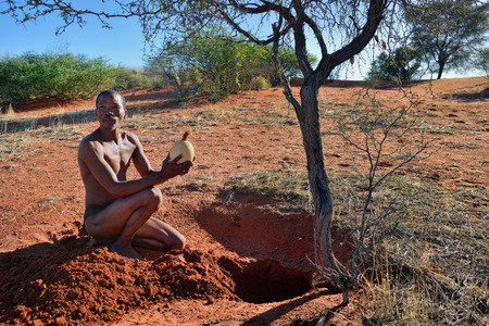 KALAHARI, NAMIBIA - JAN 24, 2016: Bushmen hunter takes an ostrich egg with water. San people, also known as Bushmen are members of various indigenous hunter-gatherer peoples of Southern Africa Editorial