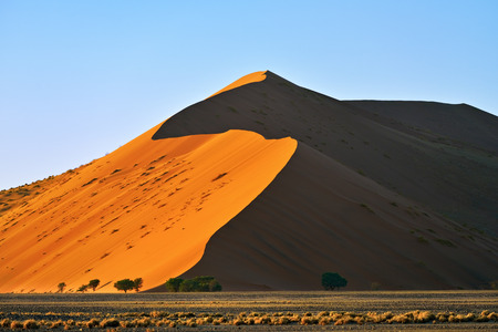 Beautiful landscape with dune 40 and trees at sunrise, Sossusvlei, Namib Naukluft National Park, Namibia Stock Photo