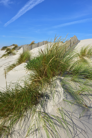 Grassy windswept vegetation growing on sand dunes at Costa Nova, a famous beach near Aveiro, Centro, Portugal