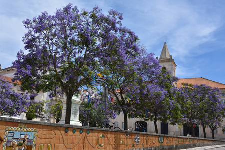 Aveiro, Portugal - June 10, 2017: Blooming wisteria and in Praca da Republica (Republic Square) of Aveiro Portugal. One from most tourists destination city in Portugal Imagens - 82784311