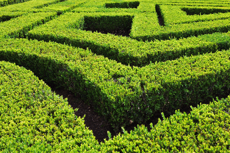 hedge: Green bushes labyrinth hedge maze in park. Portugal Stock Photo