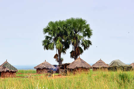 African huts and palm trees in the village in savannah Uganda. Africa 스톡 콘텐츠