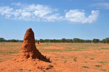 Field with big orange termite mounds shown at sunrise, Africa, Namibia