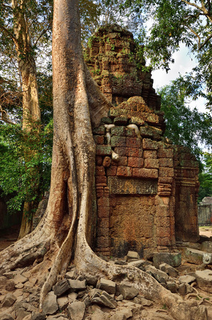 Mysterious ruins of Ta Prohm nestled among rainforest in Angkor, Siem Reap, Cambodia. Angkor is a popular tourist attraction