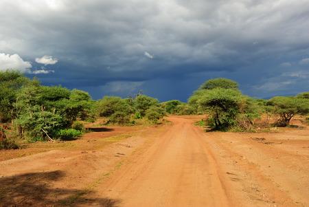 Gli alberi andacacia africani della strada non asfaltata in Africa tropicale hanno mostrato al tramonto vicino al lago Manyara, Tanzania